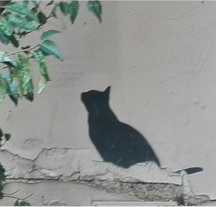Trompe l'oeil chat