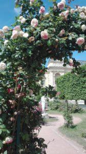 Roseraie_Jardin des Plantes