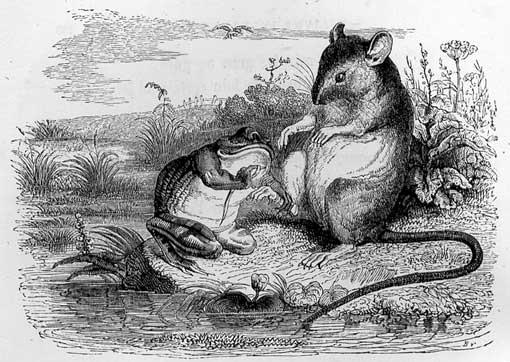 Gravure La grenouille et le rat