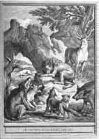 Gravure les obseques de la lionne